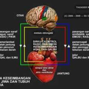 brain-heart-circuit-2-640x480