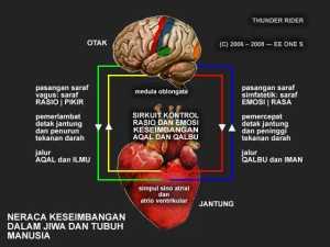 Jantung dan Pusat Akal Manusia