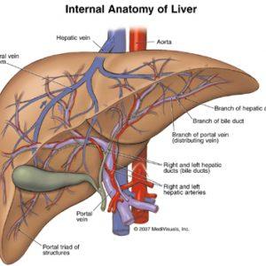 liver hati-hati